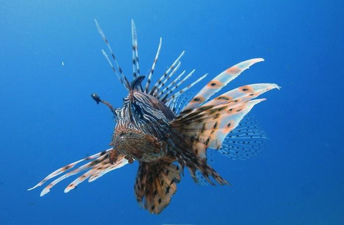 Goletta verde parte la campagna per difendere le acque for Un pesce allevato in acque stagnanti