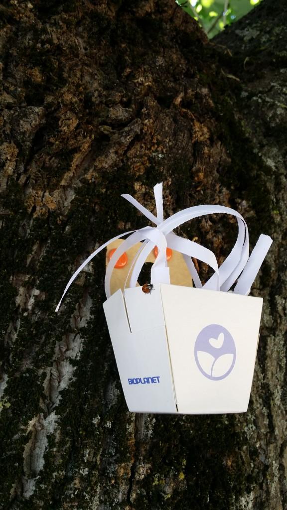 Le coccinelle iniziano a spostarsi dai cestini agli alberi - Foto di Chiara Sanvitale