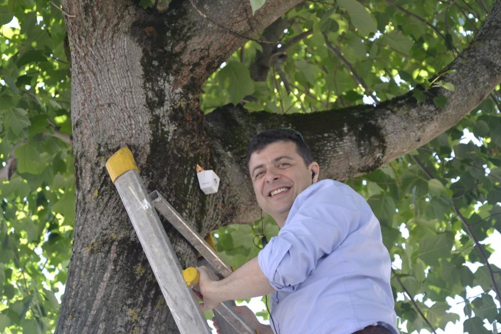Leonardo Perronace intento portare le coccinelle sugli alberi attaccati da afidi - Foto di Chiara Sanvitale