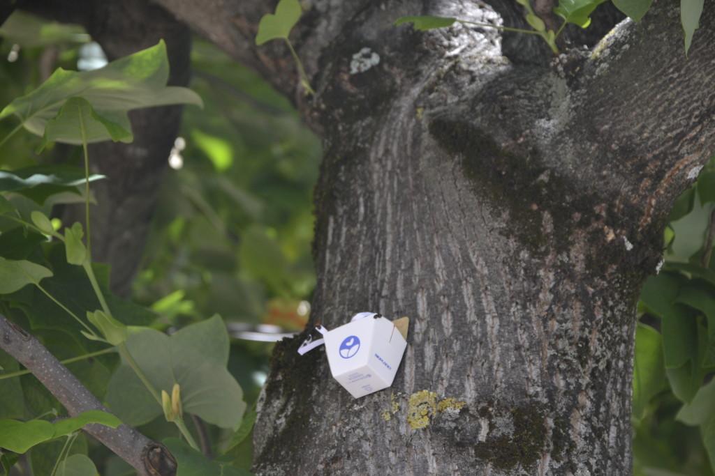 Uno dei cestini diffusori sugli alberi di Roccasecca (FR) - Foto di Chiara Sanvitale