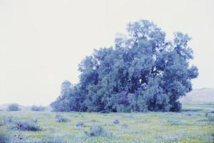 """The Night Illuminates The Night"" la mostra di Rafael Y. Hermn al Macro"
